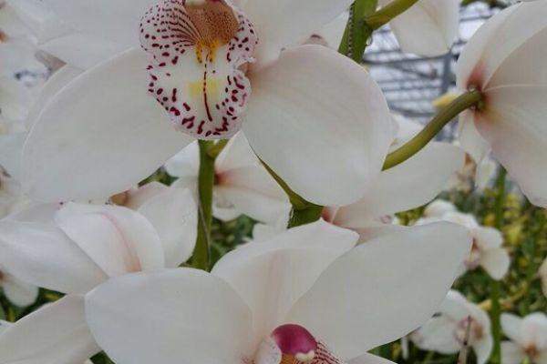 white-crystal-bloem0FA89669-3783-6988-66EC-5D8ABE8EA47A.jpg